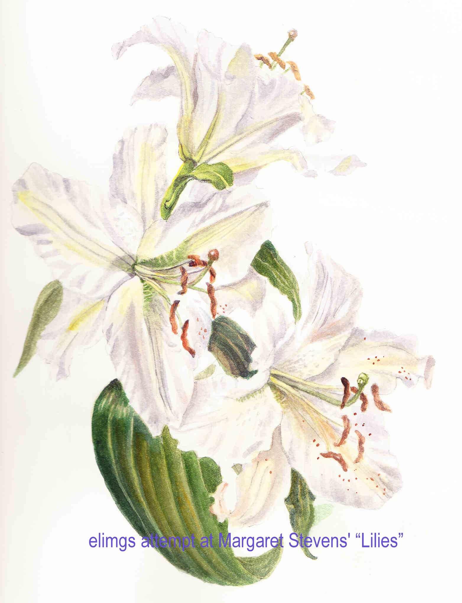 Jasmine Flower Painting Watercolors